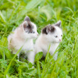 Two small kittens on the green grass. looking away — Stock Photo