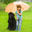 The girl with the dog under an umbrella — Stock Photo