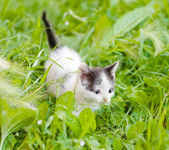 Small kittens on the green grass — Stock Photo