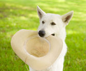 Dog holding hat in his mouth — Stock Photo