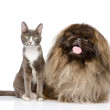 Cat and Dog posing. isolated on white background — Stock Photo