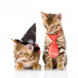 Bengal cat with witch hat. isolated on white background — Stock Photo #31882041