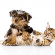 Purebred bengal kitten and Yorkshire Terrier puppy together — Stock Photo #31882093