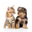 Tiny little kitten and puppy looking at each other. isolated on white — Stock Photo #31882097