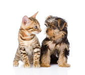 Tiny little kitten and puppy looking at each other. isolated on white — Stock Photo