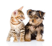 Little kitten and puppy — Stock fotografie