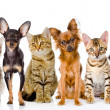 Stock Photo: Group of cats and dogs in front.