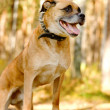 Mixed breed dog in Forest — Stock Photo