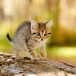 Little kitten hunting in forest — Stock Photo