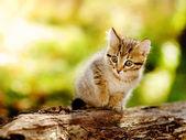 Roztomilý kotě venkovní v přírodě — Stock fotografie