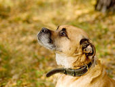 Profile of a mixed breed dog at a park — Stock Photo