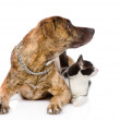 Dog and cat together looking away — Stock Photo