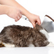 Stock Photo: Kitten getting vaccine at veterinary clinic.