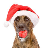 Large dog in red christmas Santa hat with gift box. — Stock Photo