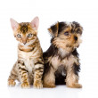 Stock Photo: Little kitten and puppy together. isolated on white background
