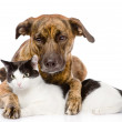 Mixed breed dog and cat lying together. — Stock Photo
