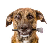 Dog holding makeup brush in its mouth. — Stock Photo
