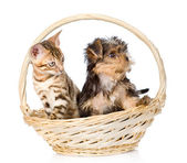 Purebred bengal kitten and Yorkshire Terrier puppy sitting in basket — Stok fotoğraf