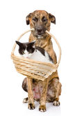 Dog holding in its mouth basket with a cat. — Stockfoto