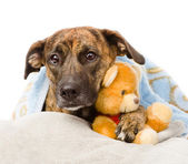Dog falls asleep in the arms of a stuffed toy. — Stock Photo