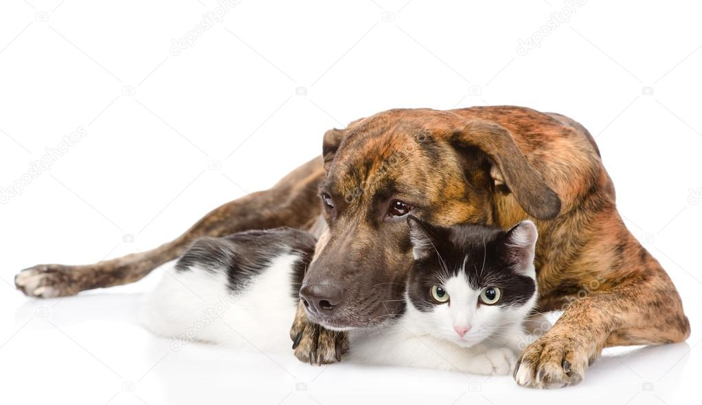 Cat Dog Breed Mix Mixed Breed Dog Hugging a Cat Isolated on White Background Photo by