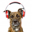 Dog listening to music on headphones — Stock Photo