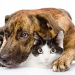 Sad dog and cat together — Stock Photo #35106831