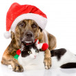 Cat and Dog with Santa Claus hat. — Stock Photo