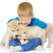 Little boy embraces two huskies puppies — Stok fotoğraf