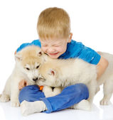Little boy embraces two huskies puppies — Stockfoto