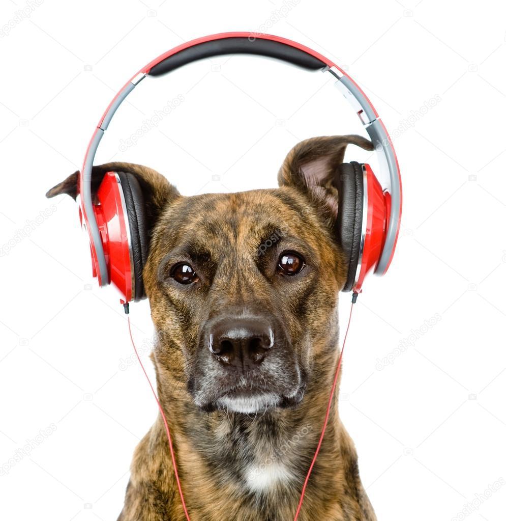狗听音乐头戴式耳机