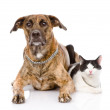 Dog and cat together looking at camera.   — Stock Photo