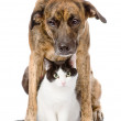 Dog and cat sitting in front.   — Stock Photo