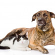 Mixed breed dog and cat together. — Stock Photo