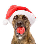 Dog with red christmas Santa hat and gift box. — Stock Photo