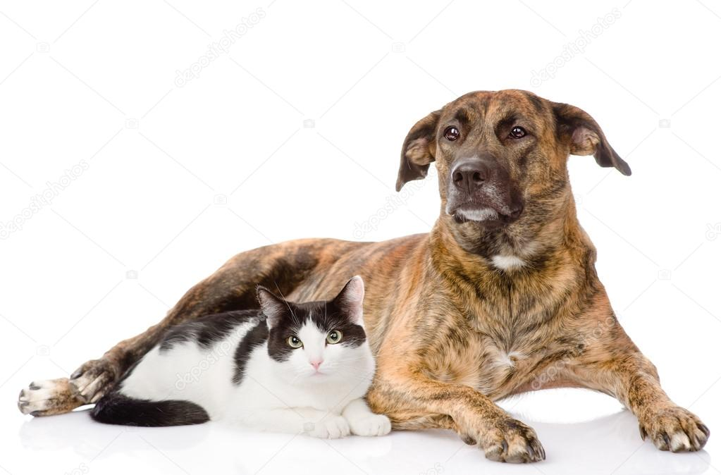 Cat Dog Breed Mix Mixed Breed Dog And Cat