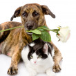Cat and dog with a white rose. — Stock Photo