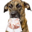 Dog holding euro in its mouth. — Stock Photo #35595901