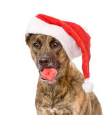 Large dog with red christmas Santa hat and gift box. — Stock Photo