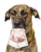 Dog holding euro in its mouth. — Stock Photo