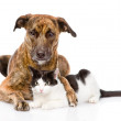 Mixed breed dog hugging a cat. — Stock Photo