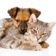 Mixed breed dog hugging cat. — 图库照片