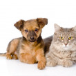 Puppy and kitten together.   — Stock Photo