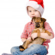 Boy with Santa hat is holding a puppy.   — Stock Photo