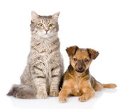 Mixed bred puppy and gray cat together. — Stockfoto