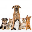 Group of cats and dogs  — Stok fotoğraf