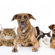 Group of cats and dogs   — 图库照片