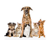 Group of cats and dogs — Stock Photo