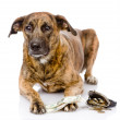 Dog with money. — Stock Photo