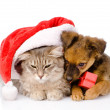 Cat and dog with santa hat and red box  — Stock Photo